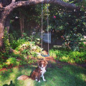 procrastipup garden allison tait